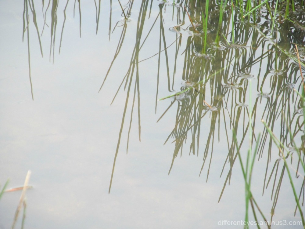 reflections in the Dromana wetlands