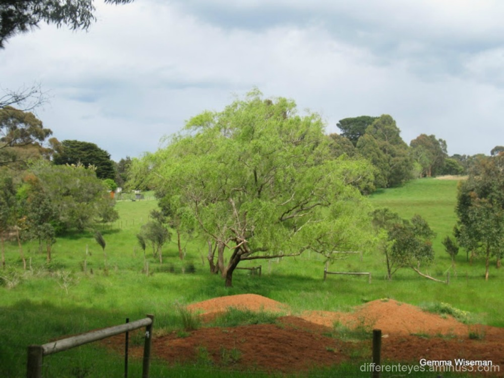 view of a farm at Red Hill...