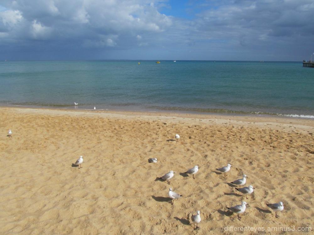 2015 Australia Day view of Dromana beach...