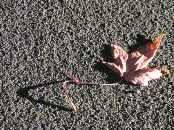 macro of a leaf and shadow
