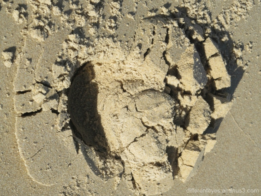 autumn Balnarring beach and horse footprint