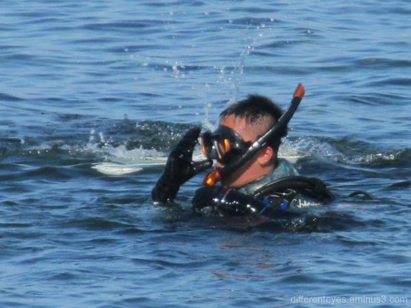 diver at Mornington...
