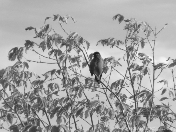 bird in a tree in black and white