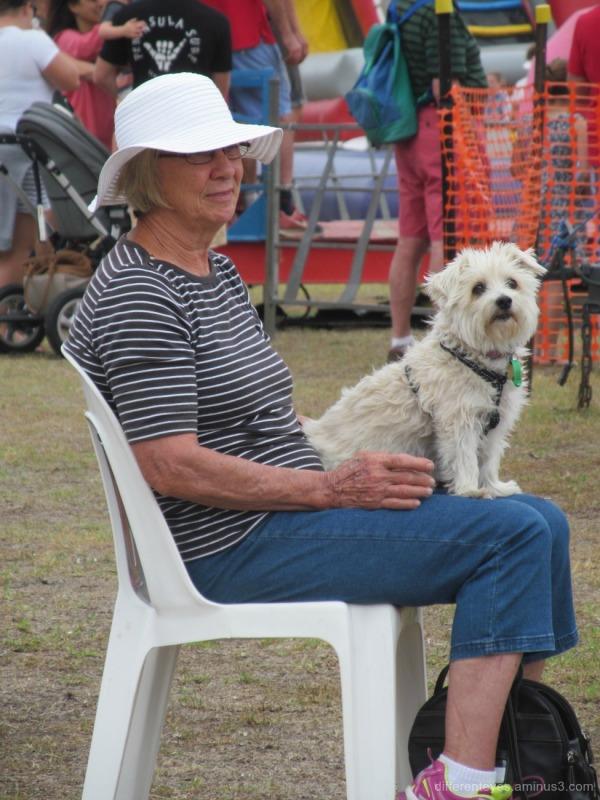 dog enjoying 2016 Rosebud Kite Festival