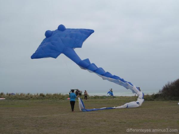 kite at the 2016 Rosebud Kite Festival