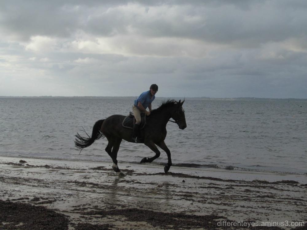 horse at Balnarring beach