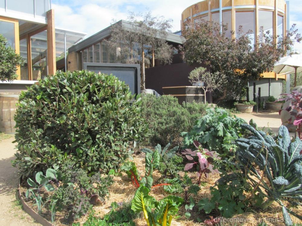 veggie garden at Montalto