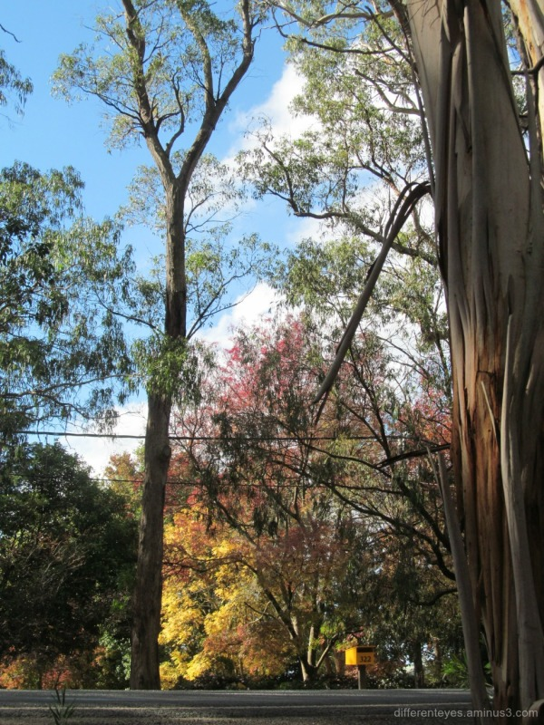 autumn trees at Red Hill