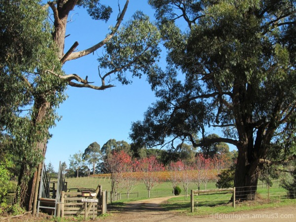 autumn farm at Red Hill