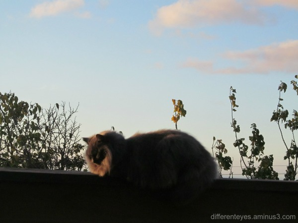 winter afternoon and a cat