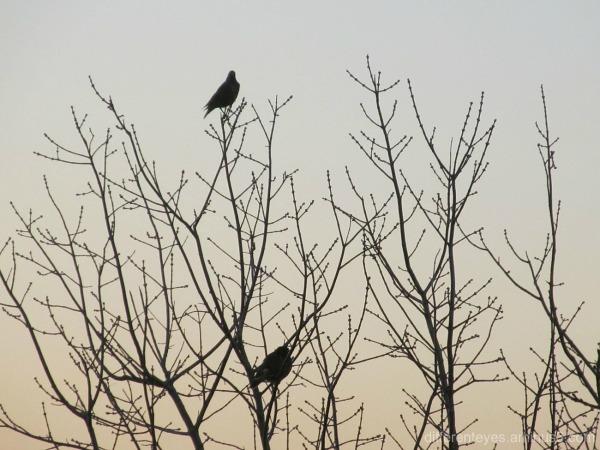 birds in a wintering tree