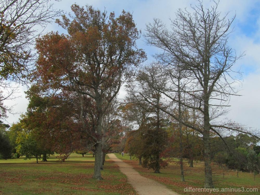 Seawinds winter trees