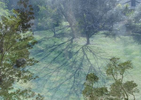 winter trees in the Dromana Hills