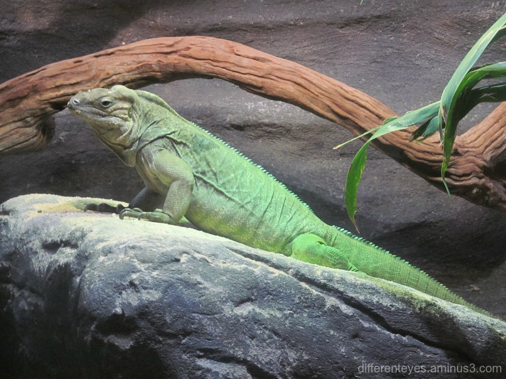 reptile at Melbourne Zoo