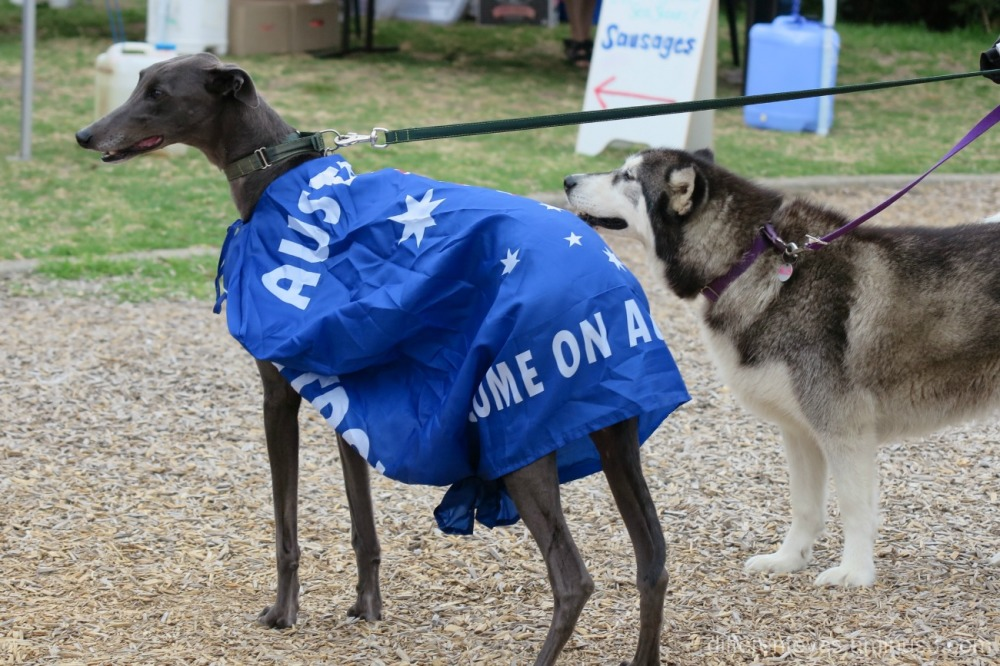 Australia Day 2017 dogs on the Dromana foreshore