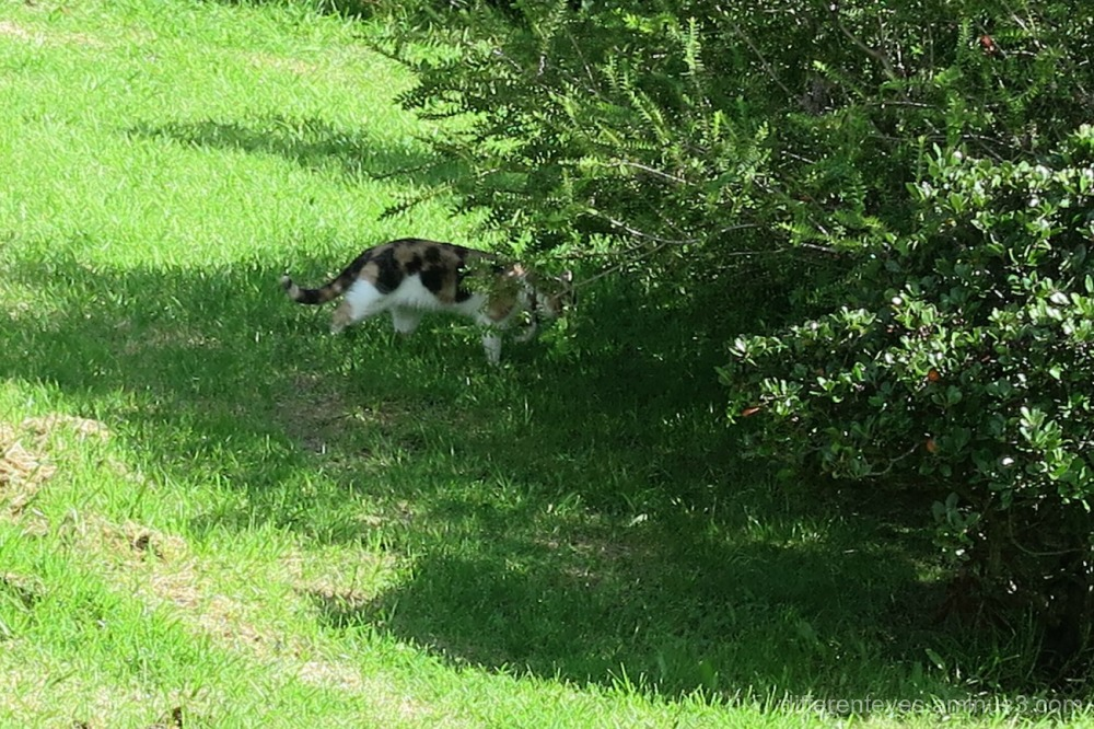 cat in the Dromana Hills