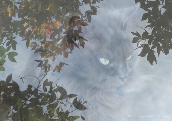surreal autumn leaves and cat