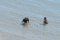 Children at Mornington beach