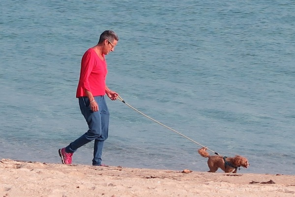 Man and dog on Dromana beach