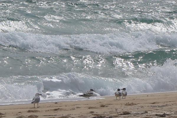 Dromana beach autumn waves