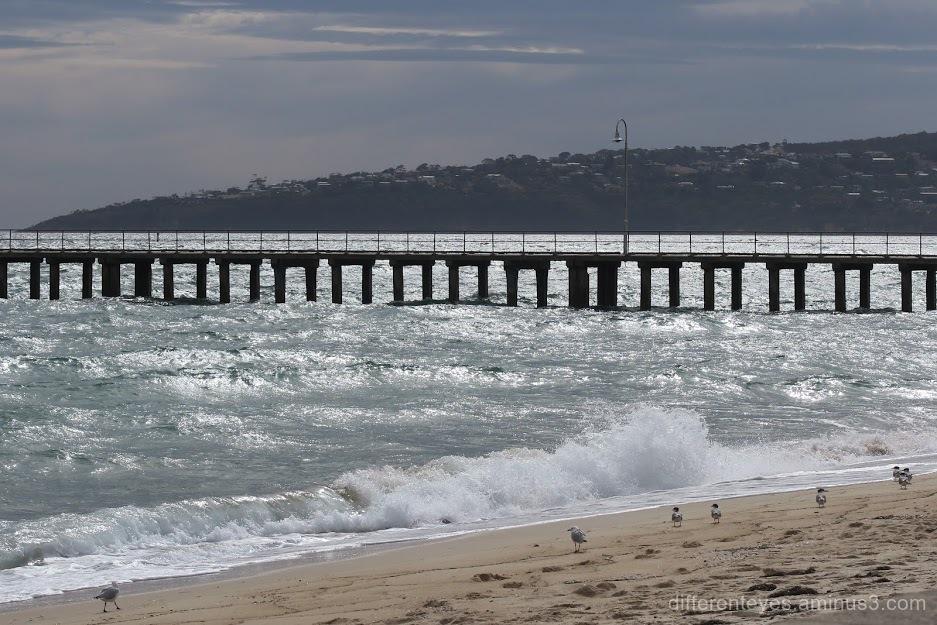 Dromana beach pier