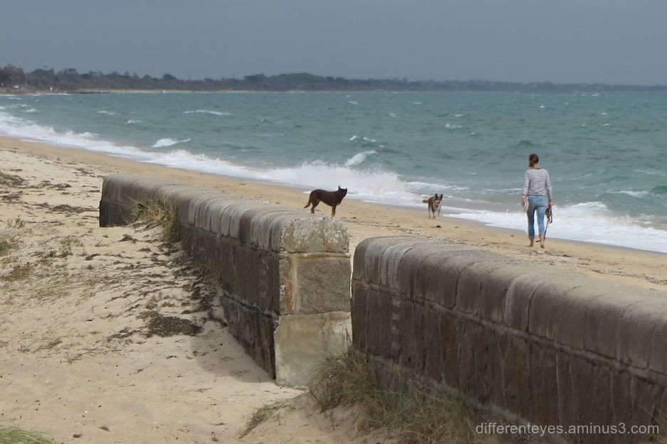 dogs at Dromana beach