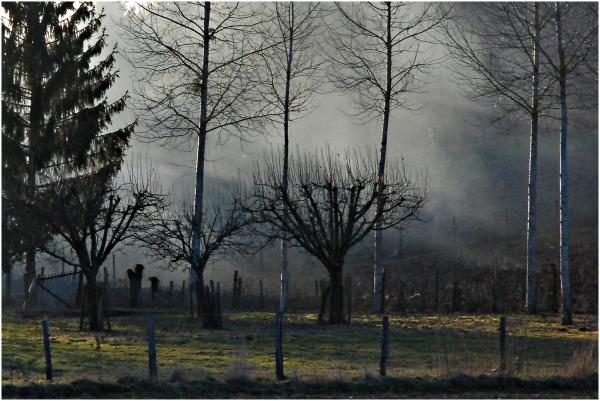 fumée dans les arbres