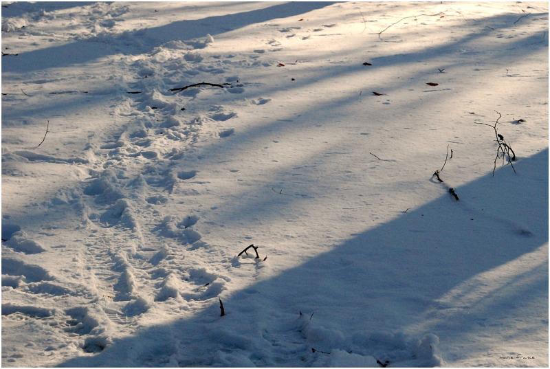 des pas dans la neige
