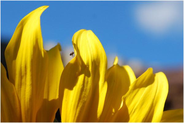 insecte sur un pétale de fleur