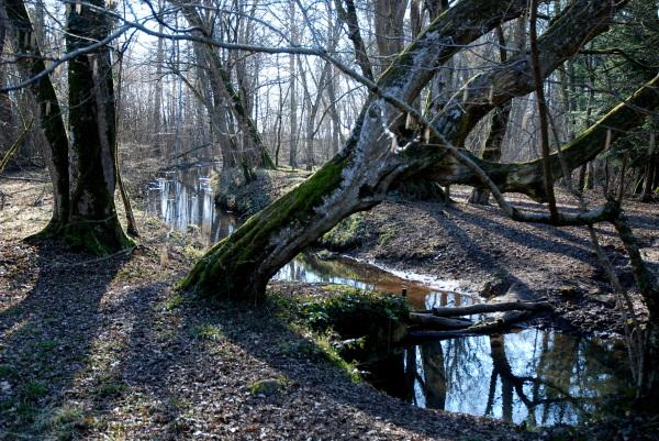 Fin d'hiver dans les bois