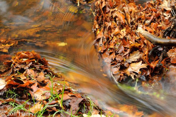 Leuvenumse-beek water