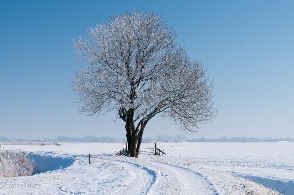 boom tree sneeuw snow pad path