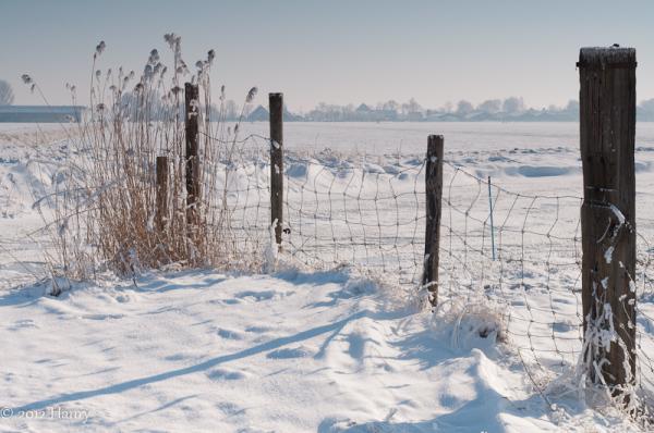 sneeuw snow pad path hek fence riet reed