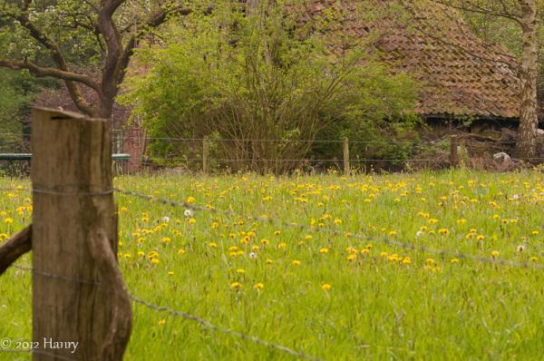 boerderij enschede ledeboerpark weide  farm meadow