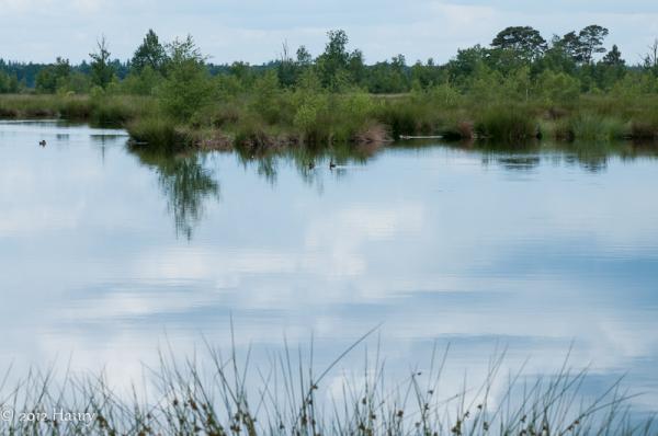 dwingeloo  reflectie water  reflection water