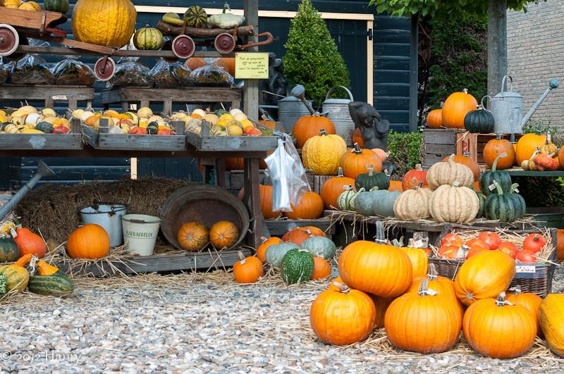 pompoen pumpkin