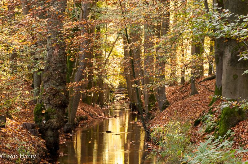 leuvenum beek bos herfst brook autumn forest