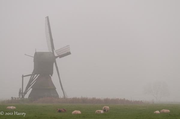 mist wipwatermolen schapen fog watermill sheep