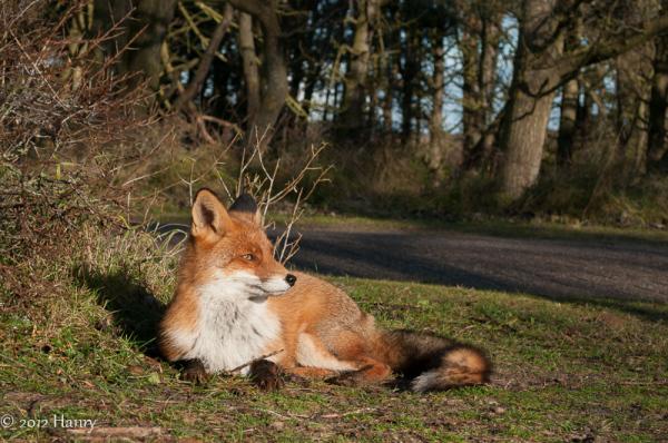 vos fox