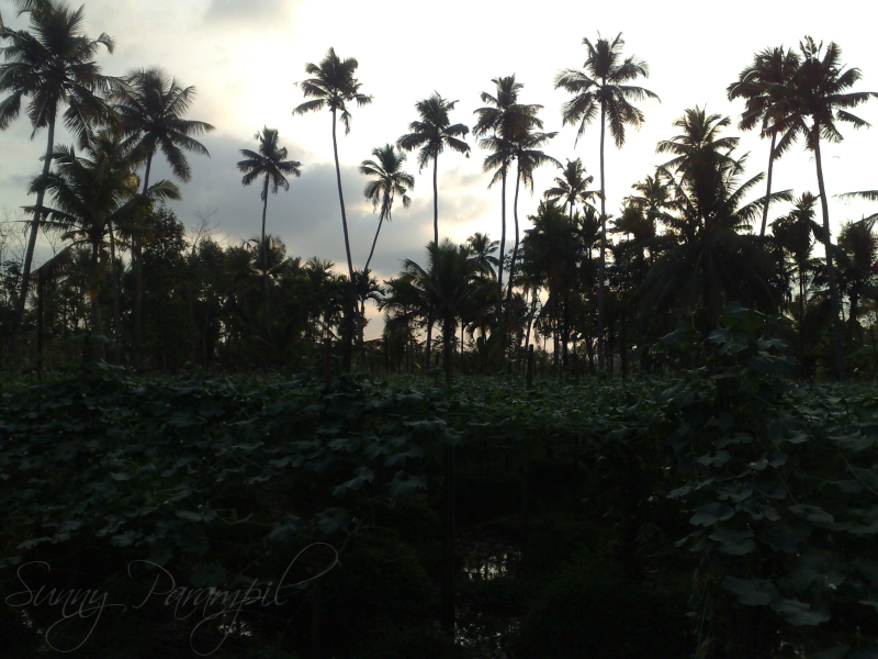 Sunset in GOD's Own Country