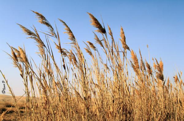 Maranjab field
