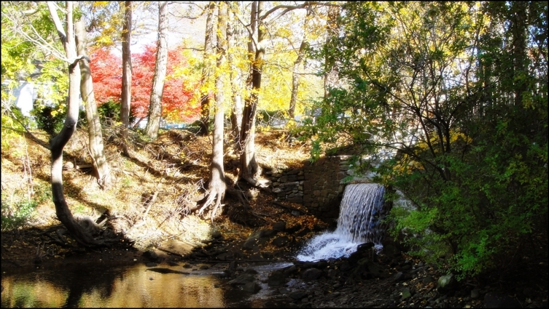 Fall in Stony Brook
