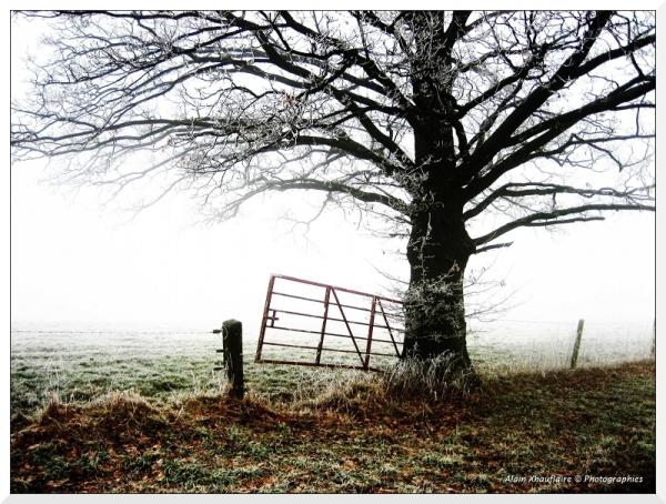 Barrière sous la brume