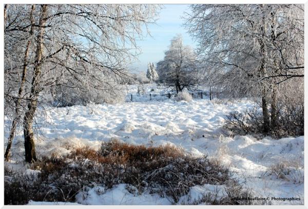 Neige sur la Fagne