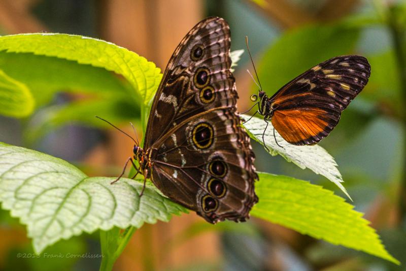 Butterflies in Papiliorana in Kerzers Switzerland