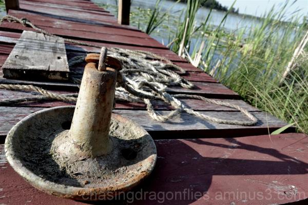 rusty boat anchor lying on old dock with reeds