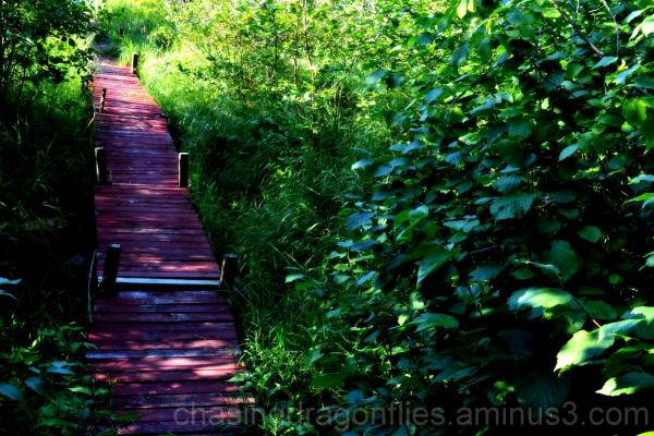 a red boardwalk running through forrest
