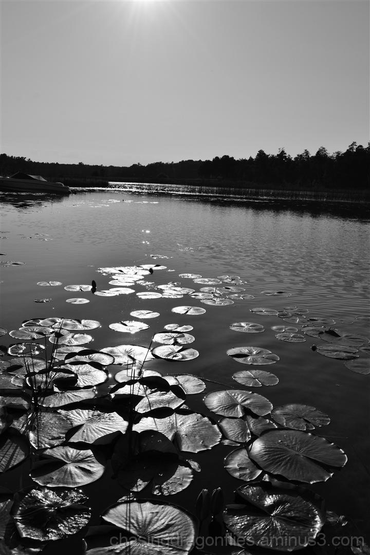 black and white sun over lake