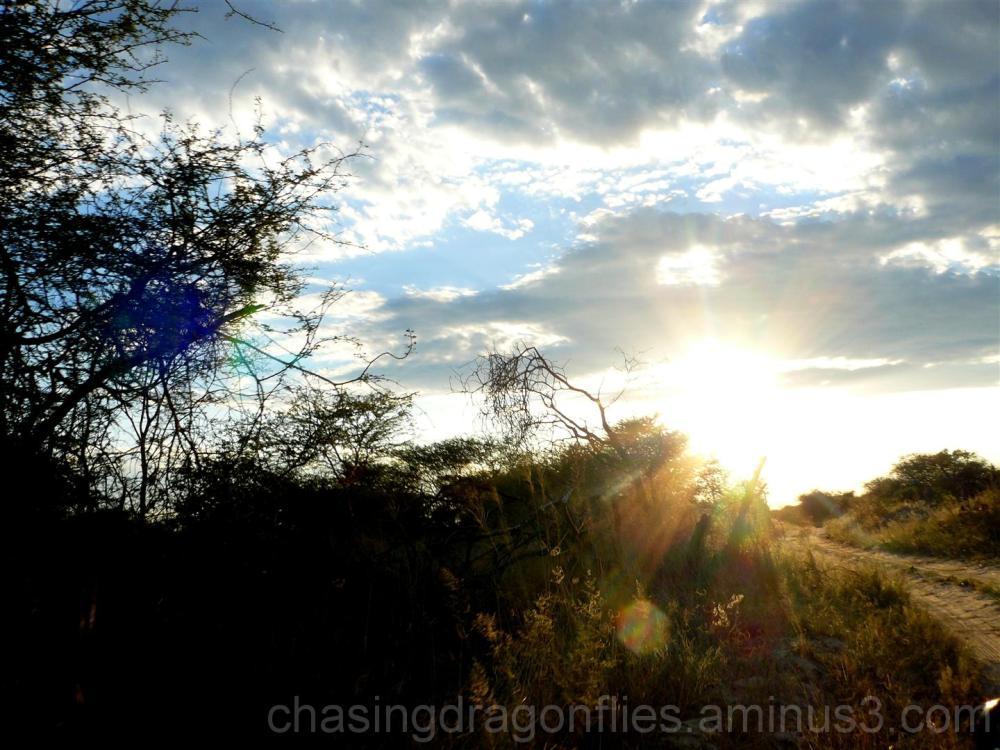 sunset star burst through underbrush