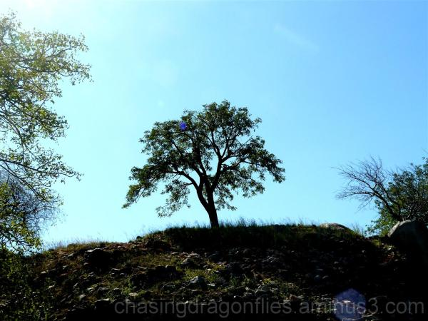 a tree on a hill silhouette